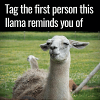 Tag them 👀: Tag the first person this  llama reminds you of Tag them 👀