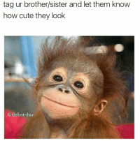 Cute, Latinos, and Memes: tag ur brother/sister and let them know  how cute they look  IG @ellentvshow Lmaoo 🐵🐵🐵😂😂😂 🔥 Follow Us 👉 @latinoswithattitude 🔥 latinosbelike latinasbelike latinoproblems mexicansbelike mexican mexicanproblems hispanicsbelike hispanic hispanicproblems latina latinas latino latinos hispanicsbelike @ellentvshow