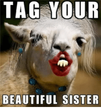 Kimberly Meme: TAG YOUR  BEAUTIFUL SISTER