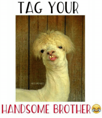 Tag em :V: TAG YOUR  HANDSOME BROTHER Tag em :V
