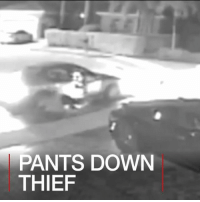 Memes, Florida, and 🤖: TAIET DOWN  PANTS DOWN  THIEF 22 JUN: A Florida car burglar is literally caught with his pants down as a wardrobe malfunction sends him crashing to the floor during a hapless getaway. Find out more: bbc.in-pantsdown Florida USA Car BBCShorts BBCNews @BBCNews