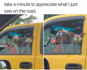 Animals, Bad, and Bad Day: take a minute to appreciate what I just  saw on the road. 30 Funny Dog Memes That Will Cure Your Bad Day - Lovely Animals World