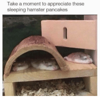 Hamstering: Take a moment to appreciate these  sleeping hamster pancakes