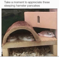 https://t.co/R8sfMDzOom: Take a moment to appreciate these  sleeping hamster pancakes https://t.co/R8sfMDzOom
