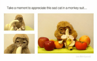sad cat: Take a moment to appreciate this sad cat in a monkey suit....  (via @shit ycool)