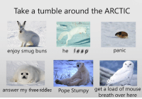 absolutely ᑕᕼIᒪᒪY: Take a tumble around the ARCTIC  p  enjoy smug buns  he le a  panic  answer my three riddles Pope Stumpy et a load of mouse  breath over here absolutely ᑕᕼIᒪᒪY