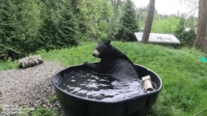 Taking a beary nice bath (via): Taking a beary nice bath (via)