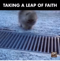 Indonesian (Language), Leap of Faith, and  Leap: TAKING A LEAP OF FAITH  Uoguhomtauttasaalij