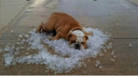 Taking care of your dog in very hot weather?: Taking care of your dog in very hot weather?