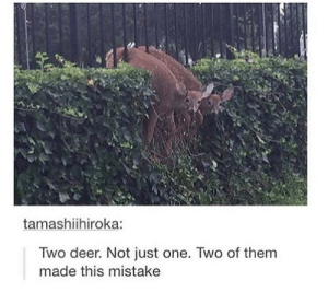 Deer, Omg, and Tumblr: tamashiihiroka:  Two deer. Not just one. Two of them  made this mistake 2 deer. Not one. 2omg-humor.tumblr.com
