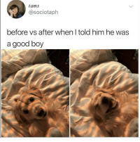 Love, Memes, and Good: tams  @sociotaph  before vs after when l told him he was  a good boy Follow @vodkalana I love her page!!