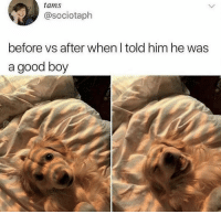 Memes, Good, and Boy: tams  @sociotaph  before vs after when l told him he was  a good boy https://t.co/nzhA9kVhmt