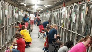 Dogs, 4th of July, and Fireworks: tant  ESESAL People are comforting scared shelter dogs during 4th of July fireworks!