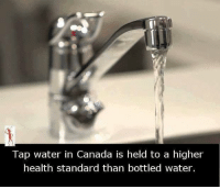 Memes, 🤖, and Health: Tap water in Canada is held to a higher  health standard than bottled water.