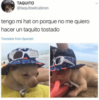 Memes, Spanish, and Translate: TAQUITO  @taquitoelcabron  tengo mi hat on porque no me quiero  hacer un taquito tostado  Translate from Spanish I don't know what this says but I'm posting it anyway.