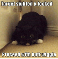 *butt wiggle*  Thanks to Jonathan Beaubein! Too cute, had to share.: Target  sighted & locked  with butt wiggle  Proceed *butt wiggle*  Thanks to Jonathan Beaubein! Too cute, had to share.