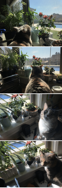 """Tumblr, Blog, and Cat: tas  gs <p><a href=""""https://yellowdaasie.tumblr.com/post/173385425249/i-wish-people-loved-each-other-as-much-as-my-cat"""" class=""""tumblr_blog"""">yellowdaasie</a>:</p>  <blockquote><p>I wish people loved each other as much as my cat loves my plants. 🌱🐈💞</p></blockquote>"""