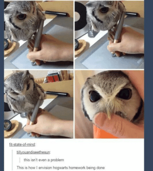 Omg, Tumblr, and Http: tate  tillyouandiseethesun  this isn't even a problem  This is how I envision hogwarts homework being done The owl just wants to playomg-humor.tumblr.com