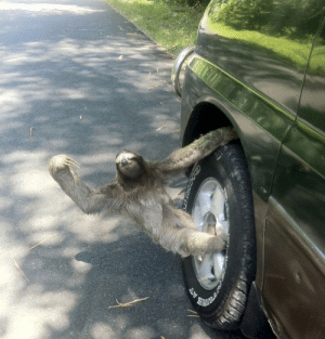 Best Friend, Friends, and Tumblr: taterkategg:  death-by-lulz: hangin out the passenger side of his best friend's ride trying to holla at me  Scrub