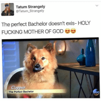 @tatum.strangely would also make an excellent bachelor: Tatum Strangely  @Tatum_Strangely  The perfect Bachelor doesn't exis- HOLY  FUCKING MOTHER OF GOD  Copper  The Perfect Bachelor  oc @tatum.strangely would also make an excellent bachelor