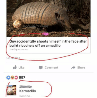 Life, Memes, and Puns: TAWAR  uy accidentally shoots himself in the face after  bullet ricochets off an armadillo  techly.com.au  98  1 Like  Comment  Share  697  Karmadillo  Posting Everybody needs puns like this in their life. (via @commentawards)