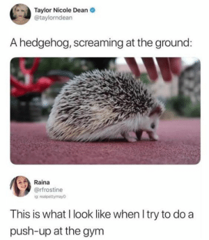 Gym, Memes, and Hedgehog: Taylor Nicole Dean  @taylorndean  A hedgehog, screaming at the ground:  Raina  @rfrostine  ig: realpettymayo  This is what I look like when I try to do a  push-up at the gym Literally Just 17 Wholesome Memes To Start Off The Week Right - I Can Has Cheezburger?
