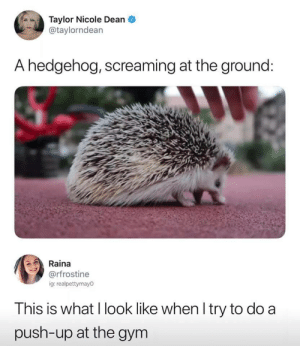 I see myself in this image and I don't like it by _Person98_ MORE MEMES: Taylor Nicole Dean  @taylorndean  A hedgehog, screaming at the ground:  Raina  @rfrostine  ig: realpettymayo  This is what I look like when I try to do a  push-up at the gym I see myself in this image and I don't like it by _Person98_ MORE MEMES