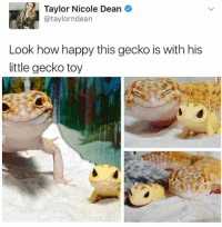 Grumpy Cat, Happy, and How: Taylor Nicole Dean  @taylorndean  Look how happy this gecko is with his  little gecko toy