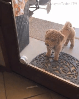 Getting a door bell for the dogs is both a good and bad idea.  By TaytaynmTaylor | TW: TaytaynmTaylor | TW Getting a door bell for the dogs is both a good and bad idea.  By TaytaynmTaylor | TW