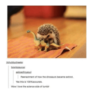 What science doesnt want you to know: tchubbycheeks:  brontozaurus:  asliceofmysoul:  Reenactment of how the dinosaurs became extinct.  Yes this is 100%accurate.  Wow I love the science side of tumblr What science doesnt want you to know