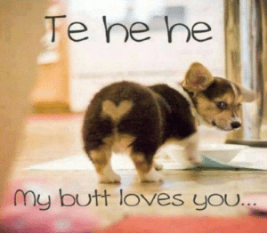 30+ Funny Animal Memes To Make You Laugh Till You Drop - Lovely Animals World: Te he he  my butt loves you 30+ Funny Animal Memes To Make You Laugh Till You Drop - Lovely Animals World