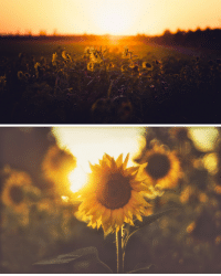 Tumblr, Blog, and Flickr: te5seract:  Last light   Assault on Sunflower  by  Stefan