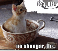 tea: tea plz.  no Shoogar, thx.  OAINHASCHEERBURGER.COMO