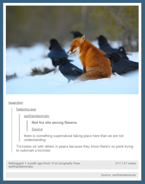 Tumblr, Ravens, and Supernatural: teaandwii  fadeintocase  earthandanimals  Red fox sits among Ravens.  Source  there is something supernatural taking place here that we are not  understanding  Tricksters sit with others in peace because they know there's no point trying  to outsmart a trickster  Reblogged 1 month ago from 51st (originally from  earthandanim als)  217,137 notes  Source: earthandanimals Tricksters stick togetheromg-humor.tumblr.com