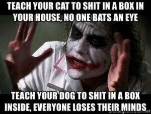 Shit, House, and Dog: TEACH YOUR CAT TO SHIT IN A BOX IN  YOUR HOUSE, NO ONE BATS AN EYE  TEACH YOUR DOG TO SHIT IN A BOX  INSIDE, EVERYONE LOSES THEIR MINDS On the upside, he hasnt had an accident in months.