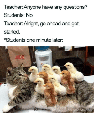 Have Any Questions: Teacher: Anyone have any questions?  Students: No  Teacher: Alright, go ahead and get  started  *Students one minute later:  ACE  RE-  boredpanda.com