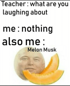 It is alright if you didnt get the above meme because you must have an IQ of 1000 to even understand what Musk said let alone think like him. So normal people like me are better off with this Elon Musk meme. by Finance_Trainer MORE MEMES: Teacher:what are you  laughing about  me: nothing  also me  Melon Musk It is alright if you didnt get the above meme because you must have an IQ of 1000 to even understand what Musk said let alone think like him. So normal people like me are better off with this Elon Musk meme. by Finance_Trainer MORE MEMES