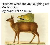 Memes, Teacher, and Brain: Teacher: What are you laughing at?  Me: Nothing  My brain: Eel on musk