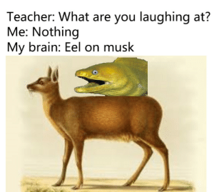 Teacher, Brain, and Eel: Teacher: What are you laughing at?  Me: Nothing  My brain: Eel on musk