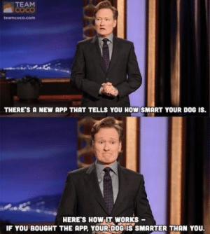 You Can't Let the Dog Winhttp://meme-rage.tumblr.com: TEAM  COCO  teamcoco.com  THERE'S A NEW APP THAT TELLS YOU HOW SMART YOUR DOG IS.  HERE'S HOW IT WORKS  IF YOU BOUGHT THE APP, YOUR DOG IS SMARTER THAN YOU. You Can't Let the Dog Winhttp://meme-rage.tumblr.com