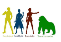 Dank Memes, Harambe, and Secret: Team Instinct  Team Mystic Team Valor Team Harambe The secret fourth team. You know who I'm repping  #TeamHarambe