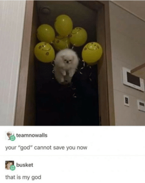 "God, Brotherhood, and You: teamnowalls  your ""god"" cannot save you now  busket  that is my god we are the brotherhood of floof"