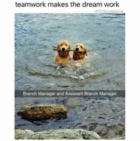 Gucci, Memes, and 🤖: teamwork makes the dream work  @Drsmashlove  Branch Manager and Assistant Branch Manager Add Capri pants, blue Gucci loafers, a colorful man-purse and an extremely sassy and fabulous demeanor and these pups are every manager and assistant manager at every clothing store I worked at in college GetItGirl GoOneSizeSmaller SoYourBootyLookMorePronounced 💅😩😂😂😂