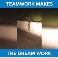 Memes, 🤖, and The Dream: TEAMWORK MAKES  THE DREAM WORK Leave no RACOON behind! #itsviral