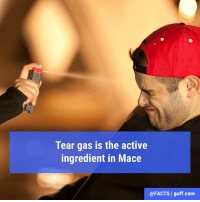 "Facts, Memes, and Mase: Tear gas is the active  ingredient in Mace  @FACTS l guff com ""Can't nobody hold me down…"" Oh wait, we're thinking a different Mase. Whatever happened to that guy?"