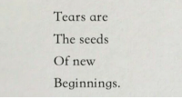 New, The Seeds, and Seeds: Tears are  The seeds  Of new  Beginnings.