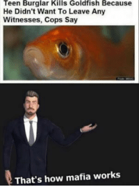 Click, Dank, and Funny: Teen Burglar Kills Goldfish Because  He Didn't Want To Leave Any  Witnesses, Cops Say  That's how mafia works CLICK HERE 4 MORE FUNNY DANK MEMES - Quoratreasury Memes by PrO_RaZe