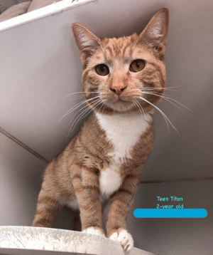 Facebook, Family, and Memes: Teen Titan  2-year old Teen Titan here - how are you doing today?  I am hoping that getting featured on this Facebook thing will help me get noticed.  Everyone keeps telling me how social and HANDSOME I am.  So hopefully it will not take too long for me to find a new family...  ADOPT ME - Teen Titan 🐾