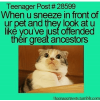 Books, Dank, and Dope: Teenager Post # 28599  When u sneeze in front of  ur pet and they look at u  like you've just offended  their great ancestors  //teenagerposts.tumblr.com Does anyone have any good books they would recommend because I can't seem to find any clean memes cleanmemes funny funnymemes humour cleanhumour funnyhumour cleanbreadmemes bread yahhh ugh yay lol cool omg dope dank hashtag