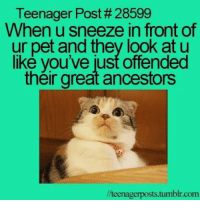 Memes, 🤖, and Teenagers: Teenager Post #28599  When u sneeze in front of  ur pet and they look at u  like you've just offended  their great ancestors  lteenagerposts.tumblr.com